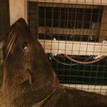 Причины приостановления оформления двух морских котиков, следуемых из Республики Уругвай